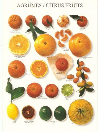 картинки цитрусовых фруктов