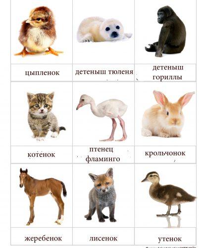Детеныши животных с названиями