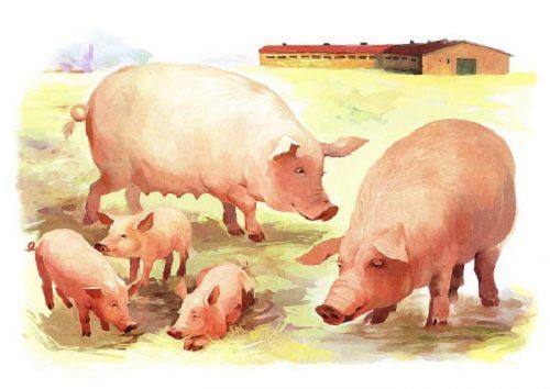 картинки животных