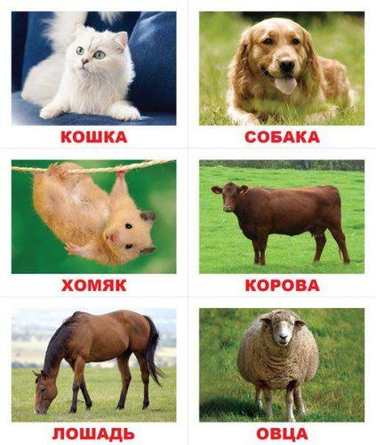 маленькие карточки домашние животные