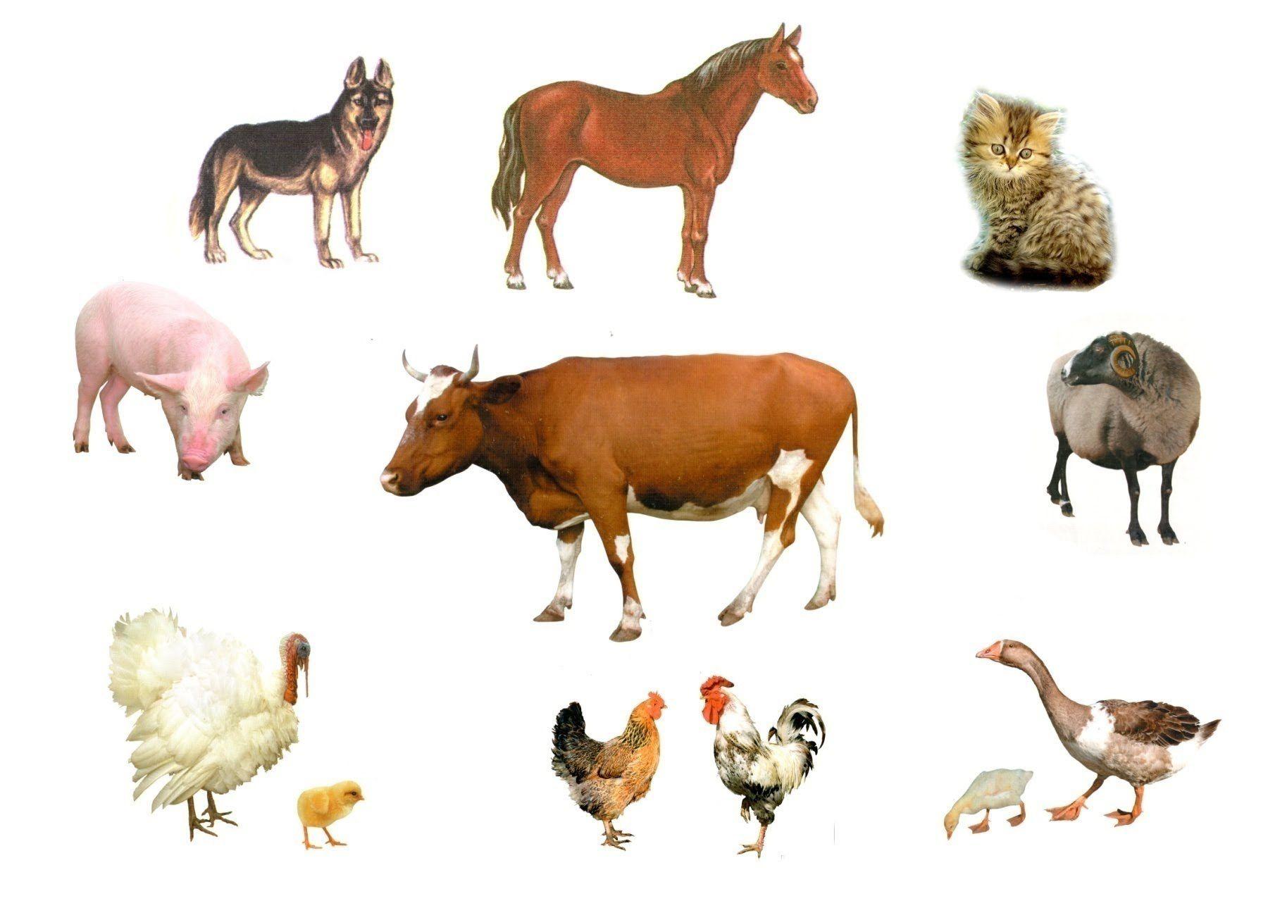 Звуки животных скачать для детей