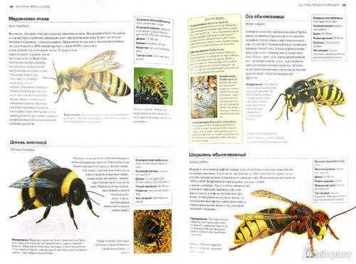 энциклопедия насекомые для детей
