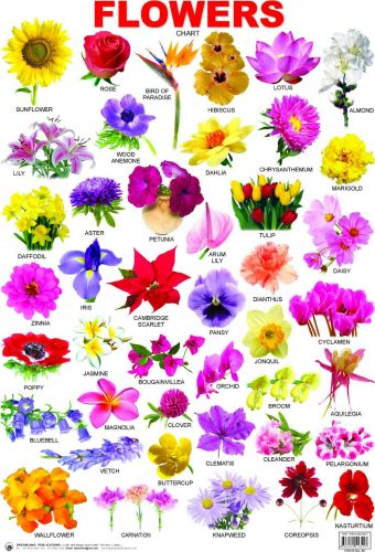 плакат цветы по-английски