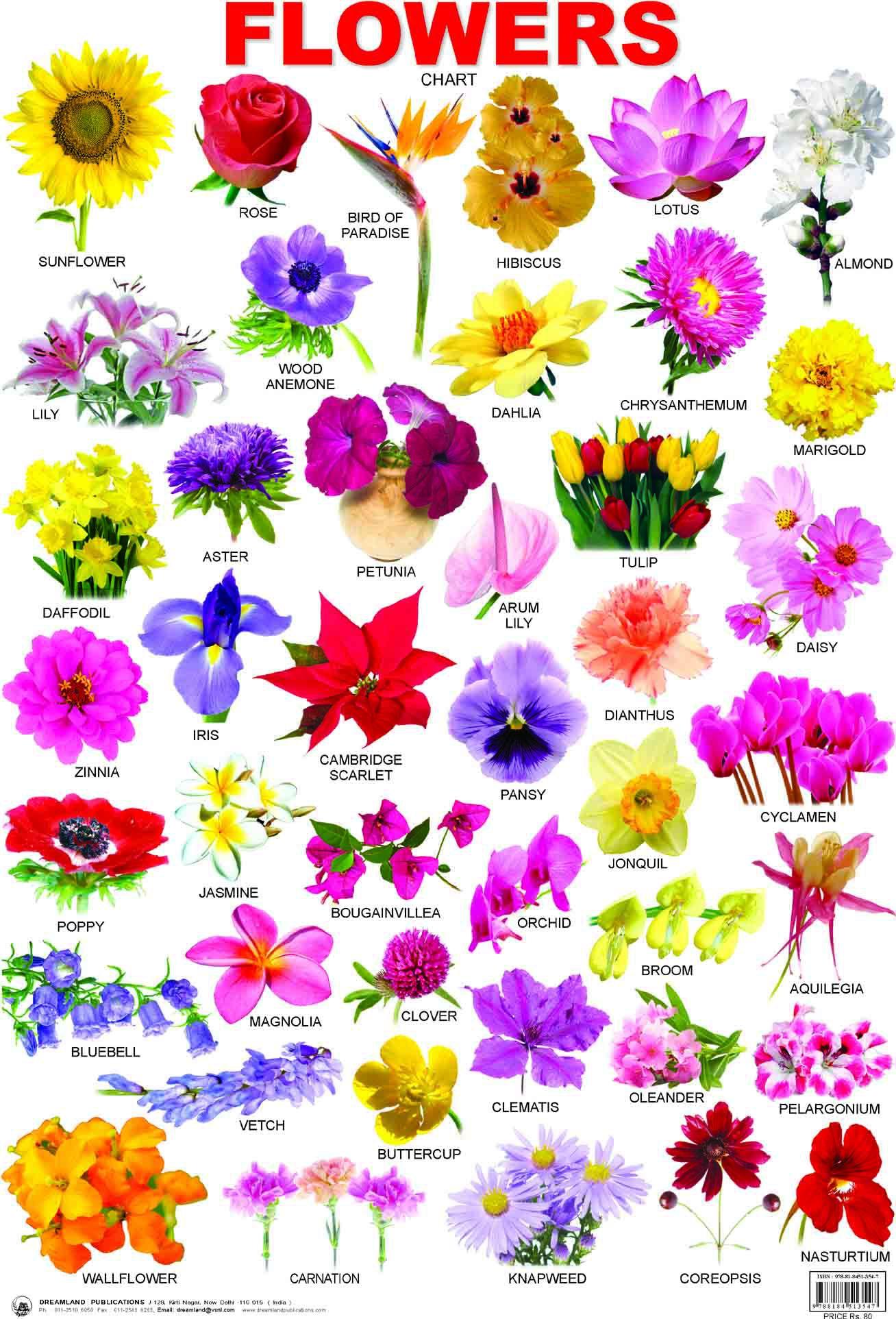 лесные цветы картинки с названиями