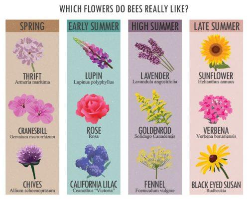цветы на английском7