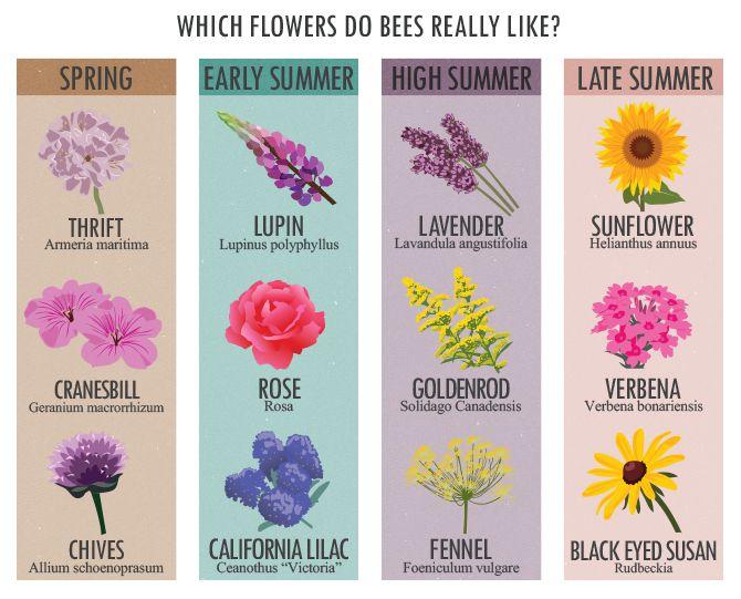 Названия цветов по английски