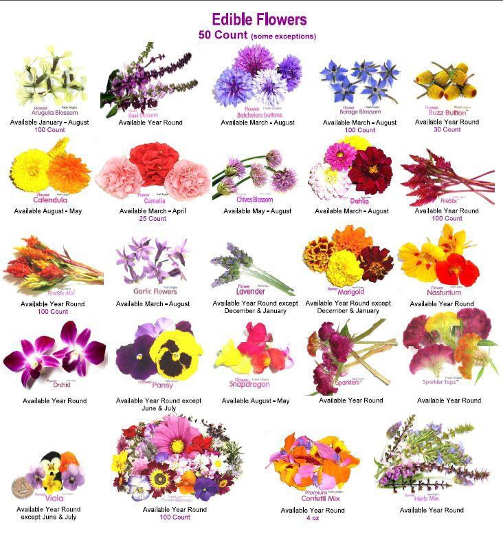 Цветы с названием фото