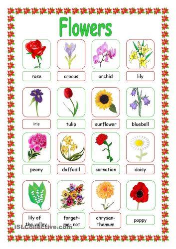 цветы на английском12