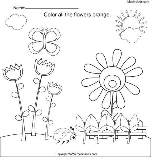 цветы на английском18