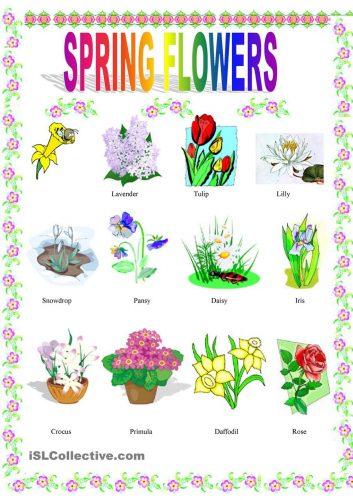 плакат весенние цветы