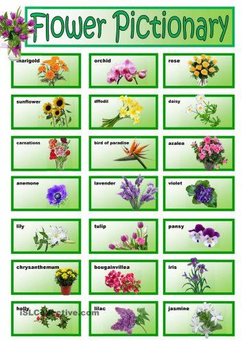 цветы на английском11