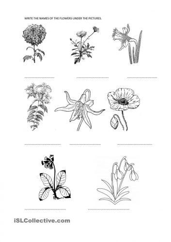 цветы на английском14