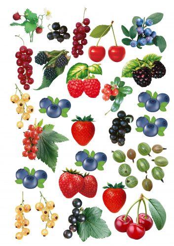 картинки ягоды