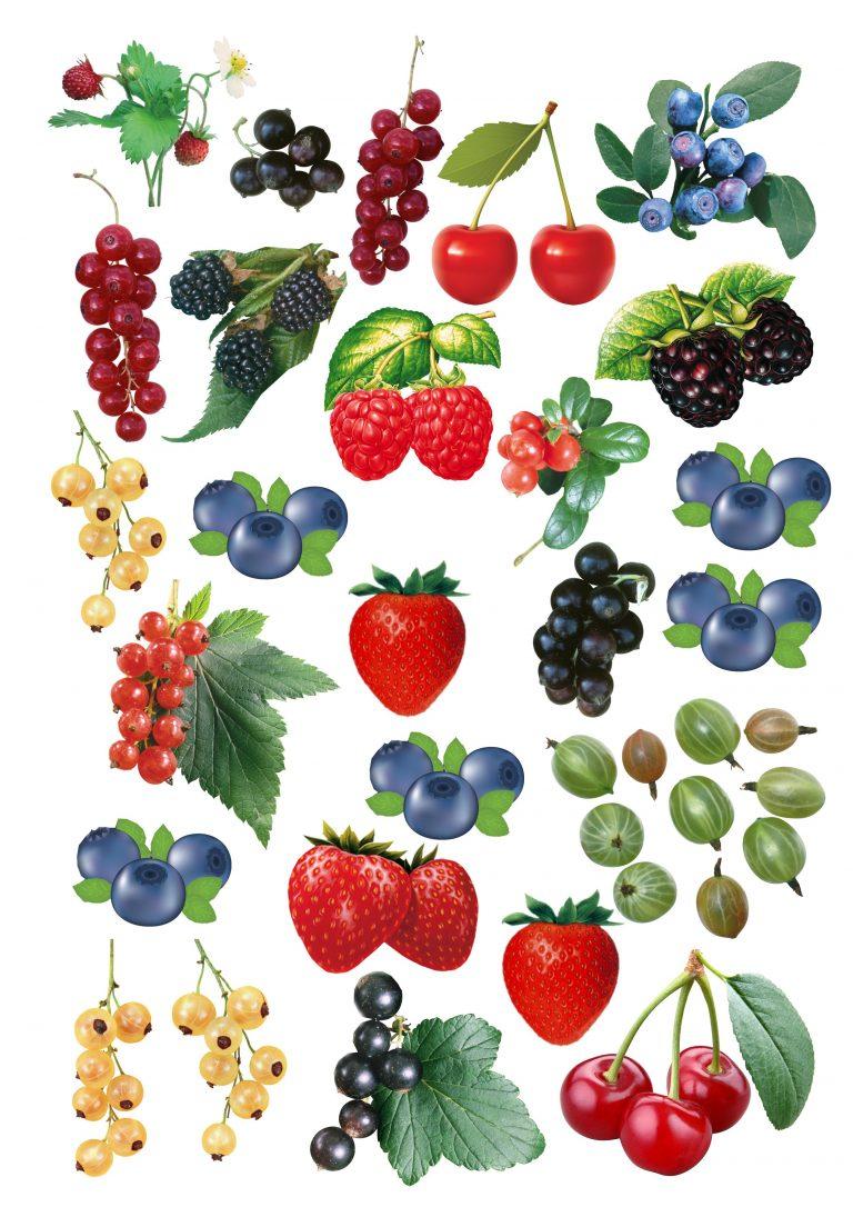 красивыми нежными картинки разных ягод нарисовать самая высокая