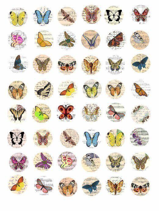 фото с названиями насекомых