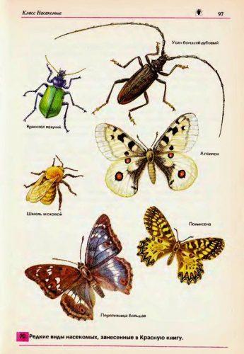 исчезающие виды насекомых