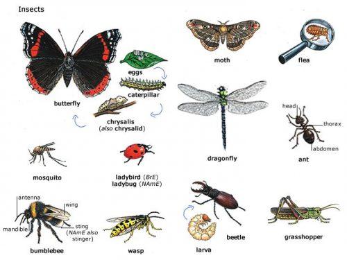 виды насекомых для детей