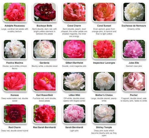 цветы на английском6