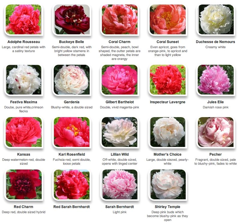 все цветы с фото и названиями
