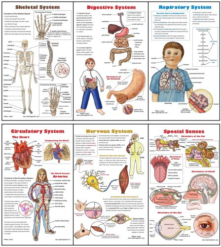 части тела по английски8