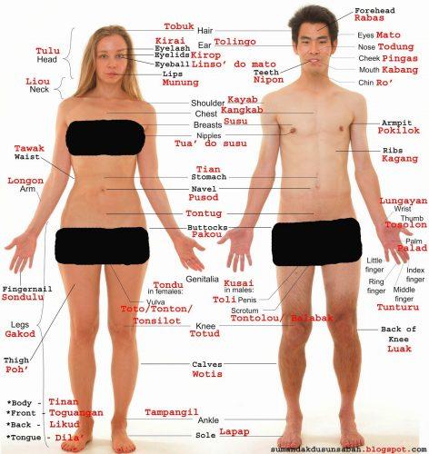 части тела на английском языке8