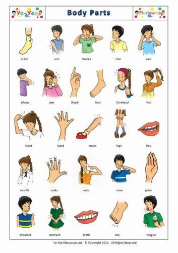 части тела человека на английском