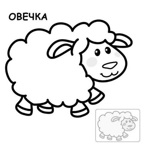 овца разукрашка
