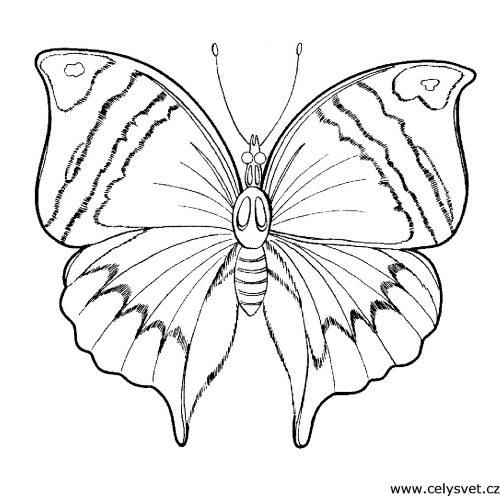 бабочка ракраска