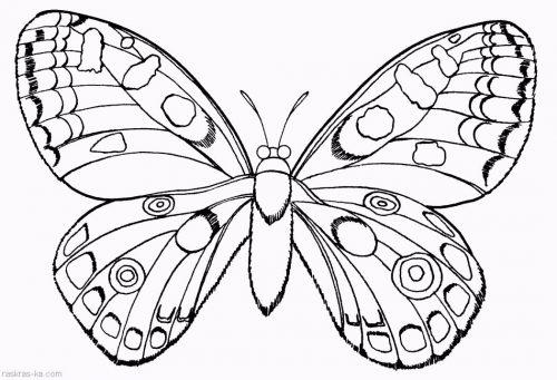 бабочка раскраска
