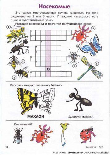 кроссворд про насекомых