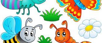 насекомые для детей