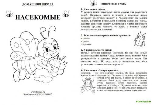 насекомые интересные факты для детей