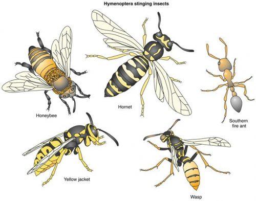 жалящие насекомые виды