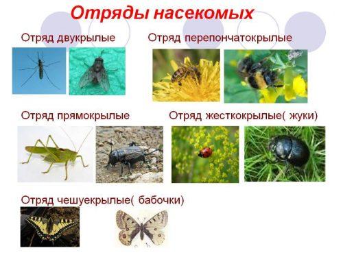 насекомые в квартире виды