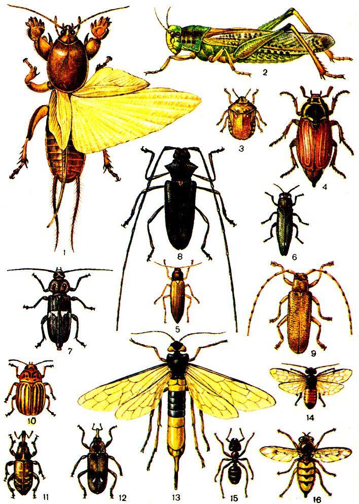 Богомол: описание, виды, фото, где живет.