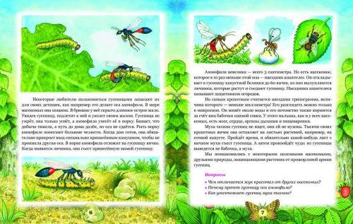 интересные факты для детей о насекомых
