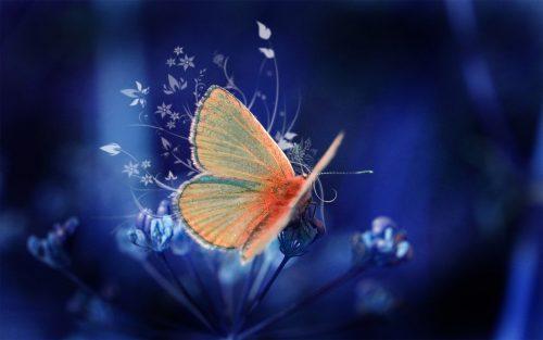 бабочки фото2