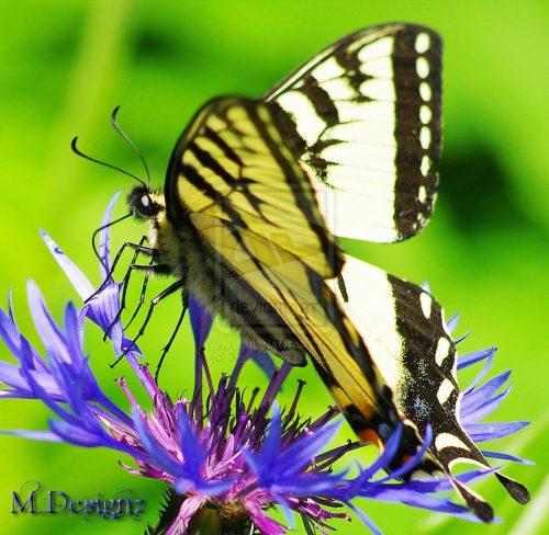 бабочки фото10