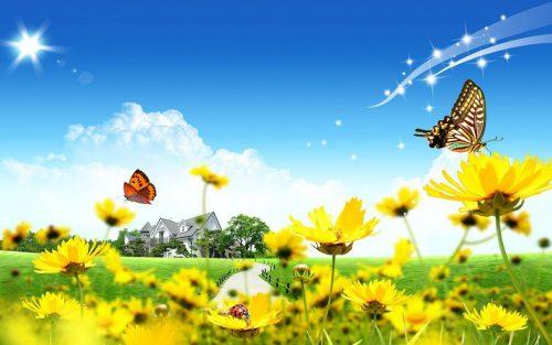 бабочки фото3