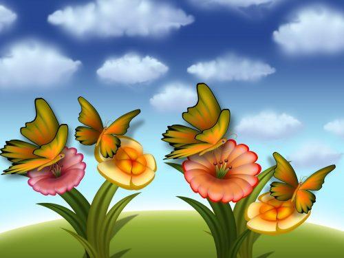 бабочки фото4