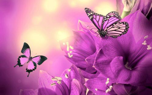 бабочки фото5