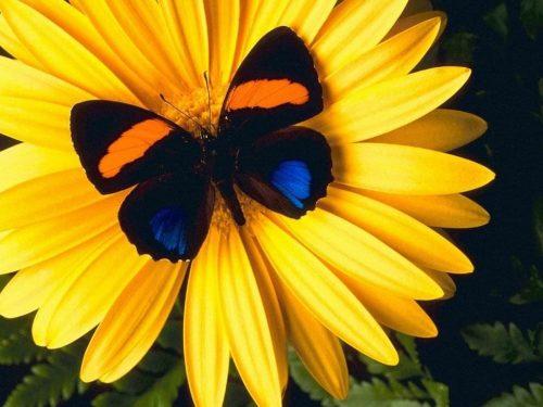 бабочки фото6
