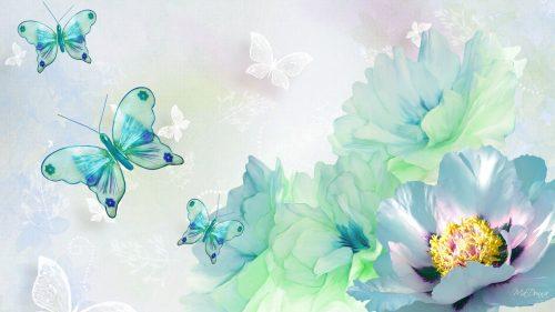 бабочки фото7