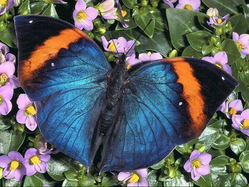 бабочки фото8