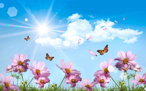 бабочки фото9