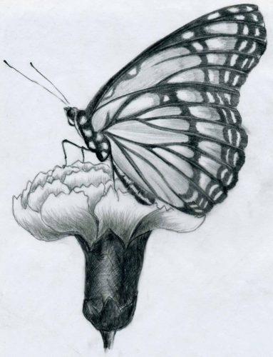 картинки карандашом бабочки