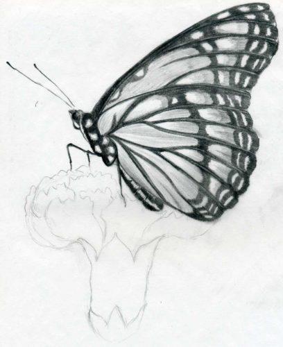 картинки карандашом бабочки2