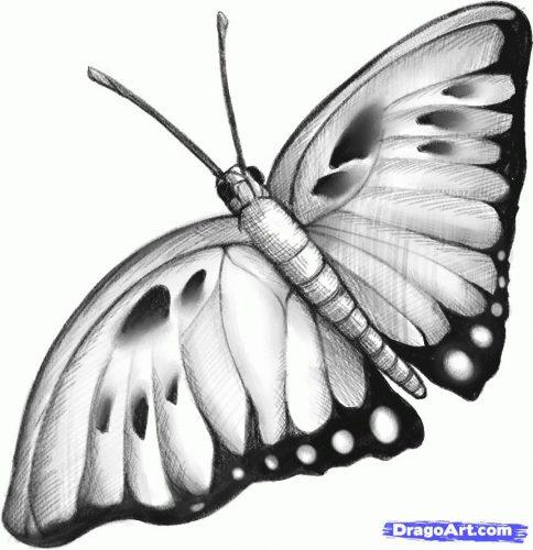 картинки карандашом бабочки4