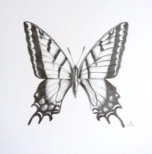 картинки карандашом бабочки5