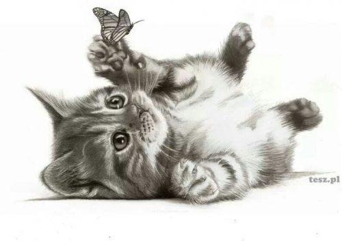 картинки карандашом бабочки7